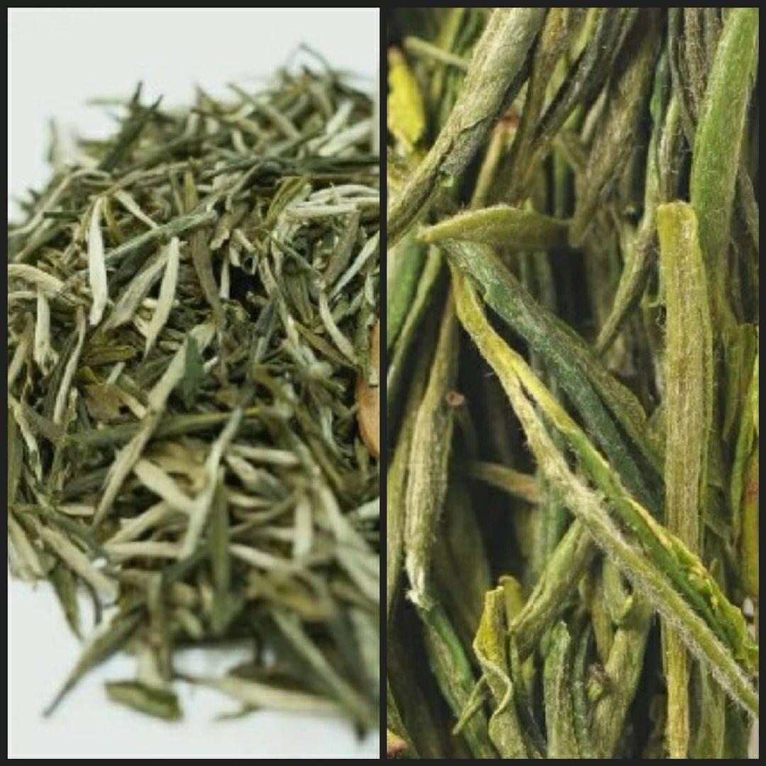 Лаошань люй ча – самый северный чай китая - teaterra | teaterra