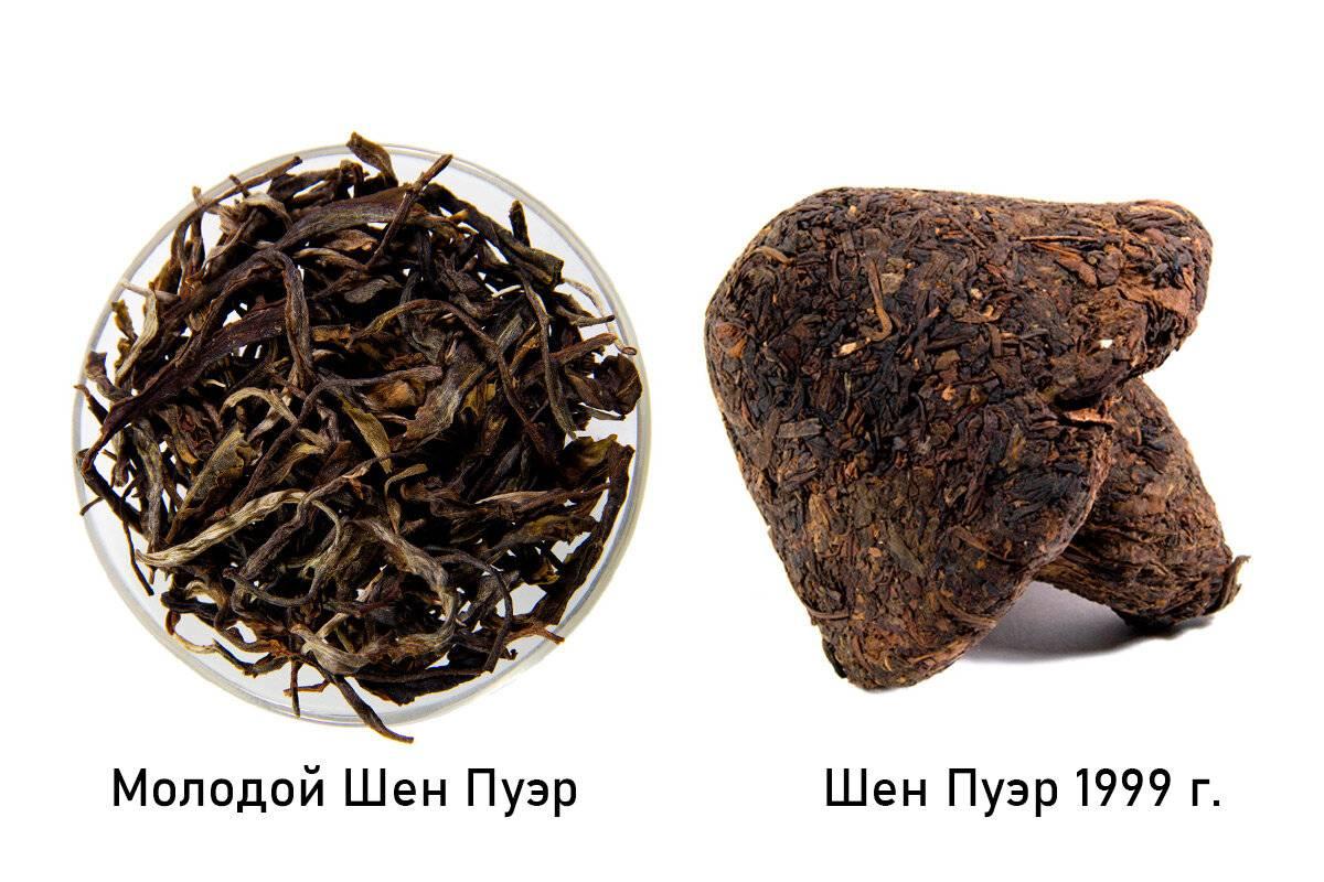 Шен пуэр – «сырой» прессованный целебный чайс уникальным вкусом