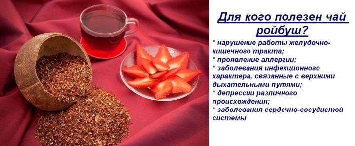 Ройбуш чай: полезные свойства и противопоказания