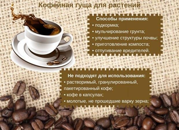 Кофейная гуща: использование для красоты, в быту и на даче