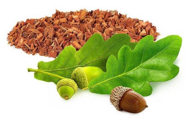 Кора дуба – лечебные свойства и противопоказания, народные рецепты от заболеваний, состав