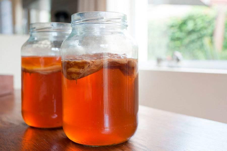 Польза и вред чайного гриба на организм человека