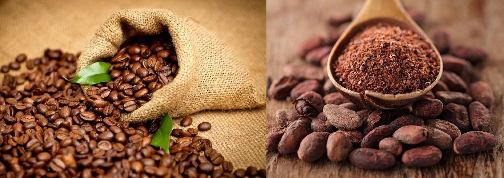 Что полезнее какао или кофе? - секреты кофе и счастье какао