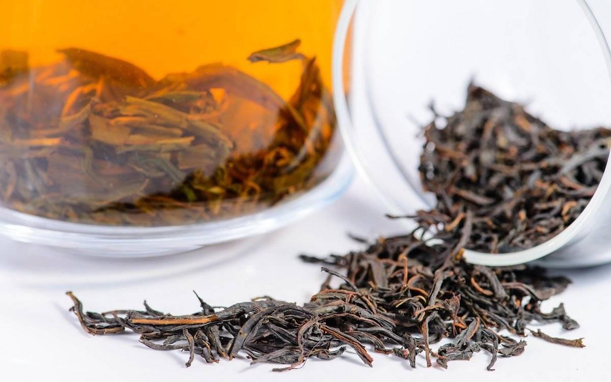 Спитой чай как удобрение: польза, рецепты для дачи