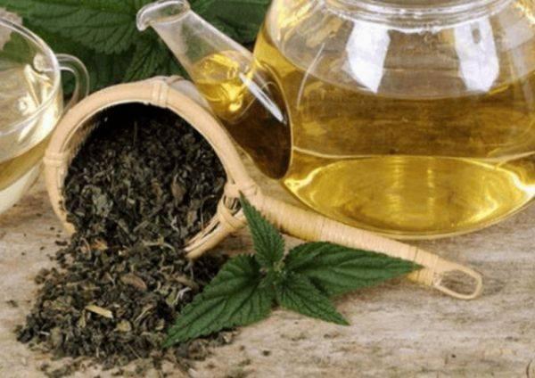 Чай из крапивы: полезные свойства и лучшие рецепты