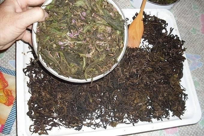 Как правильно заваривать иван-чай в домашних условиях