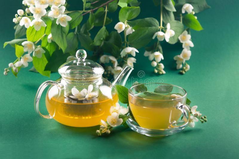 Жасминовый чай: польза и вред, как заваривают