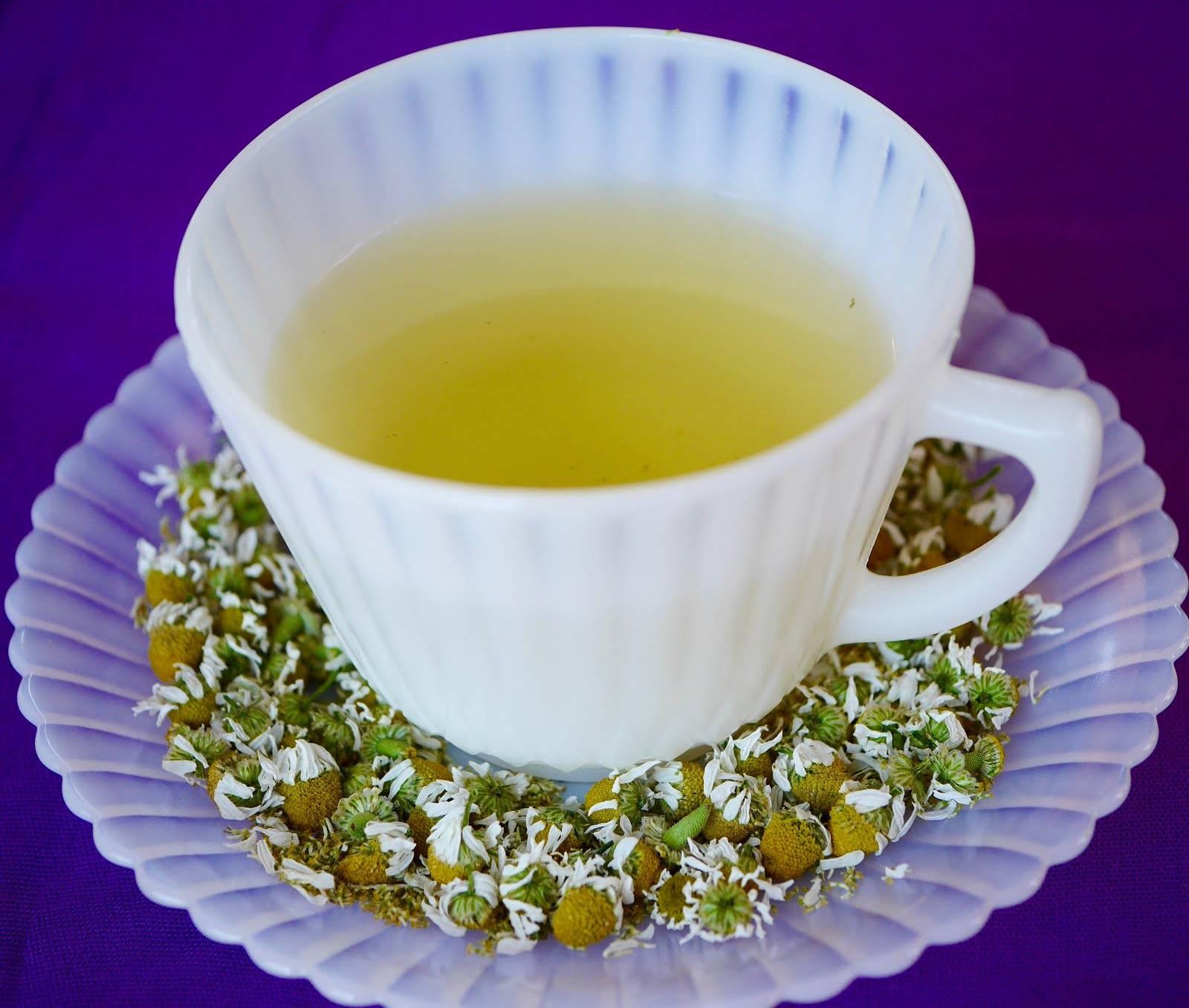 Цветы хризантемы — легкая горчинка и сладкое послевкусие
