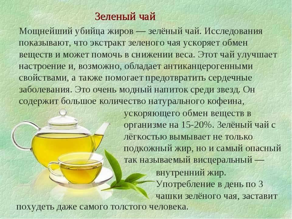 Зеленый чай - польза и вред для организма мужчины и женщины