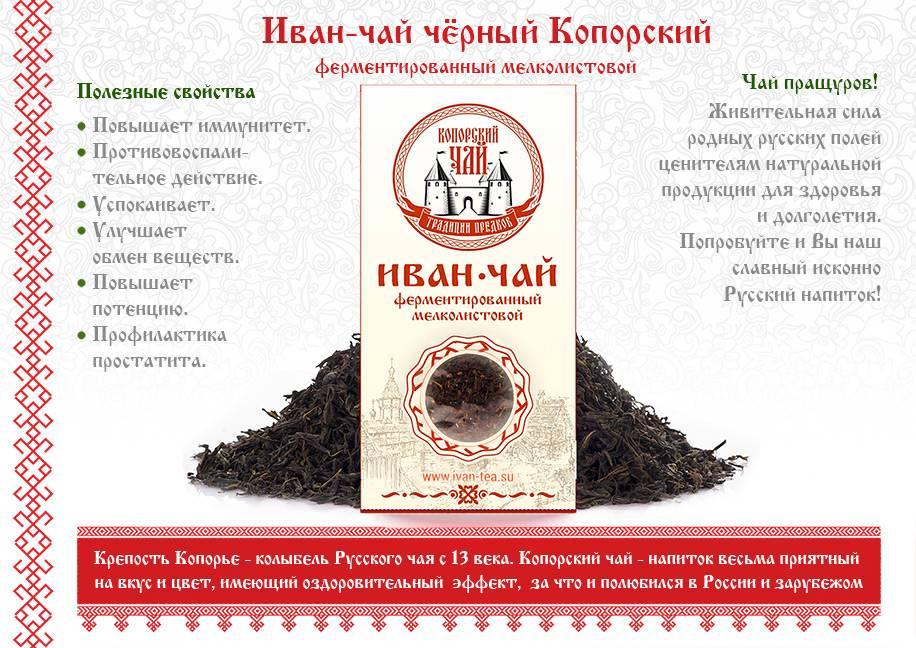 Кипрейный чай: польза и вред, кому полезен иван-чай
