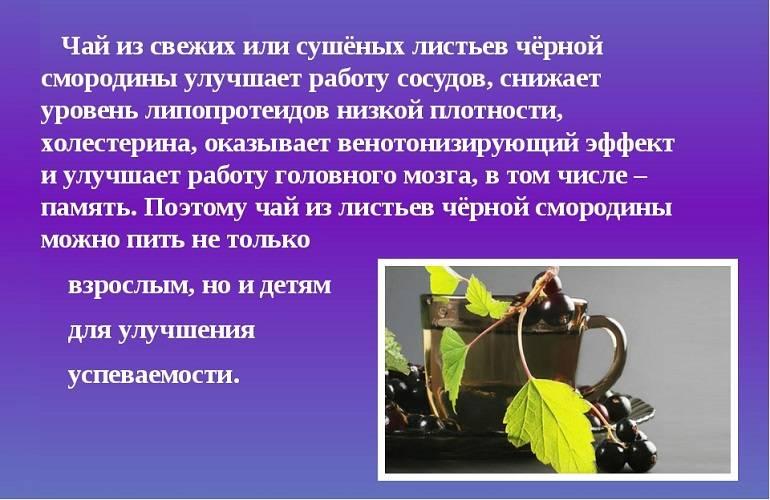 Целебный домашний чай из листьев черной смородины