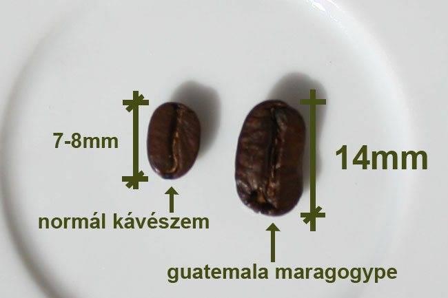Кофе со склонов гватемальских вулканов.
