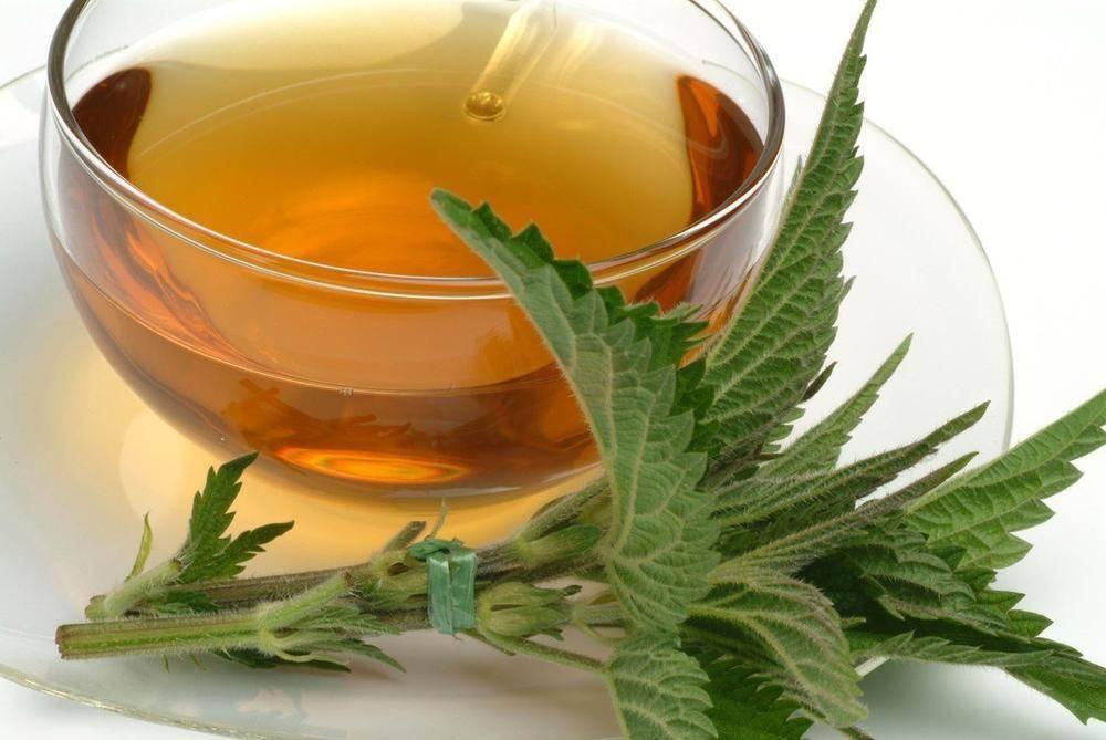 Чай из крапивы: польза и вред для организма человека