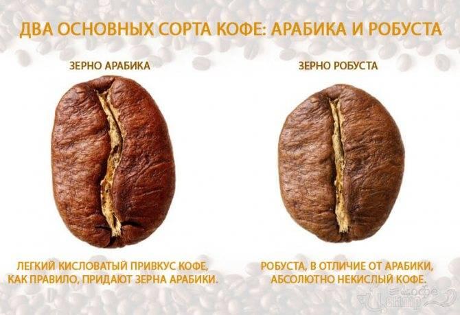 Почему и какой кофе кислит - в зернах, кофемашине и турке