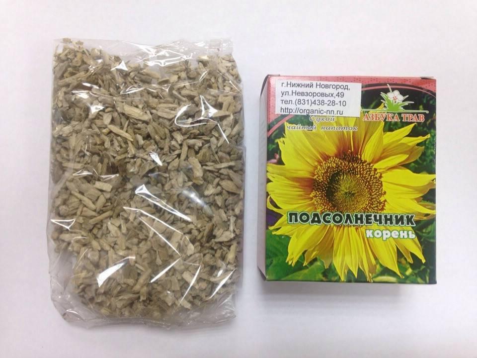 Чем полезен корень подсолнуха, лечебные свойства и вред от растения