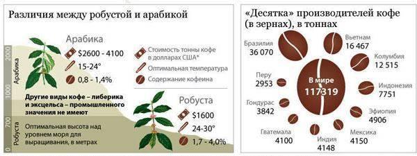 Полный обзор сорта кофе робуста: польза и вред для здоровья