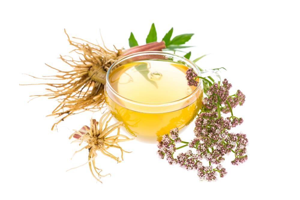 Валериана лекарственная: лечебные свойства и противопоказания | народная медицина