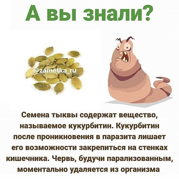 Тыквенные семечки - польза, как принимать мужчинам и женщинам