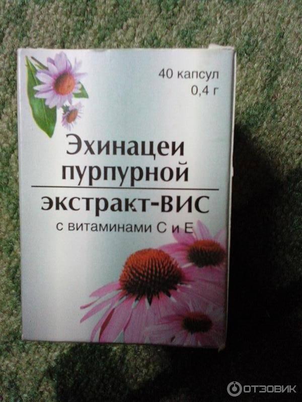 Эхинацея: вред, побочные эффекты, взаимодействие с препаратами