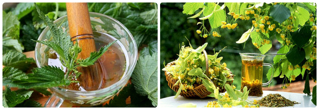 9 лучших и полезных рецептов чая из крапивы: действие на организм, правила сбора листьев, способы приготовления