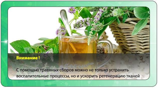 Травы для очищения организма: недорогие и эффективные средства