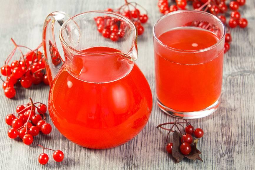 Клюква: полезные свойства и противопоказания, рецепты морса и настойки