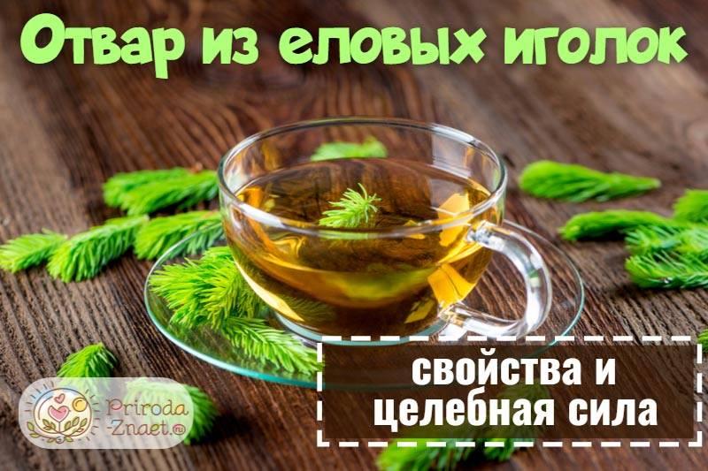 Чаи из хвои. полезные и целебные свойства. рецепты