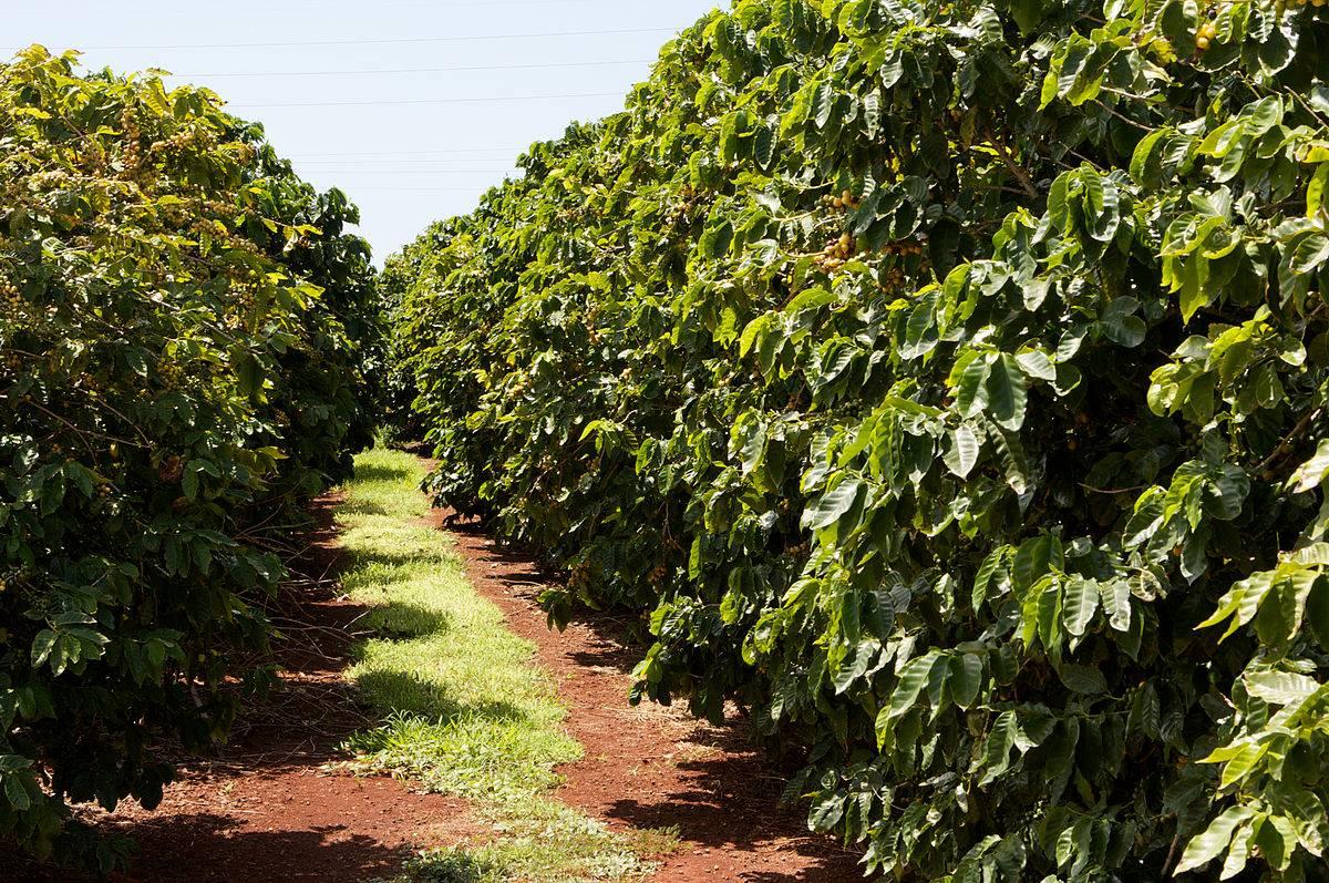 Путешествия                                  5 стран, где делают лучший кофе в мире