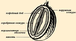 Сорта кофе: список с характеристиками и названиями