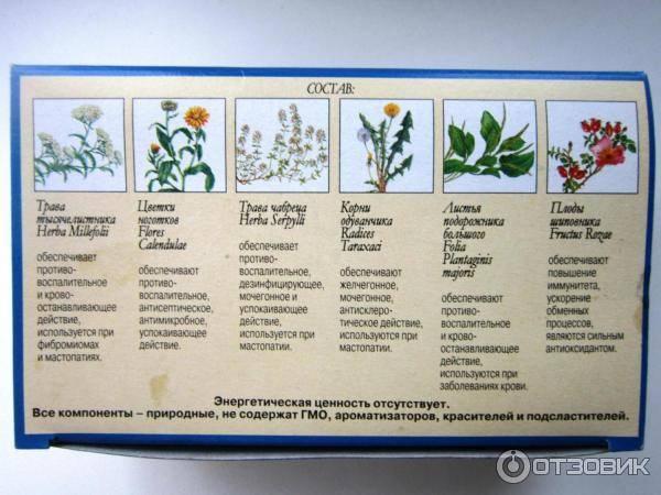 Чай от мастопатии, мастопатийный: мастофитон, другие составы и сборы