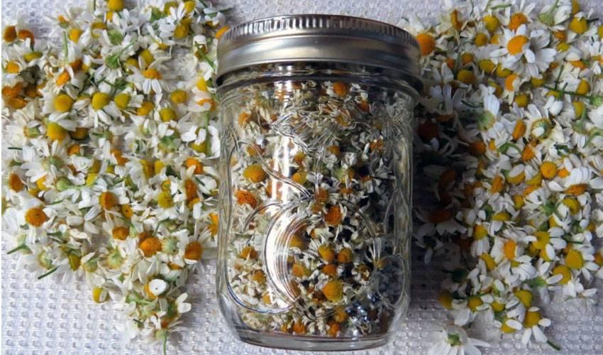 Как приготовить ромашковый чай в домашних условиях?