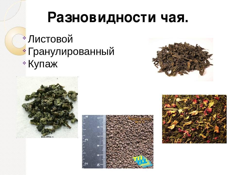 Как выбрать листовой чай и правильно заварить его