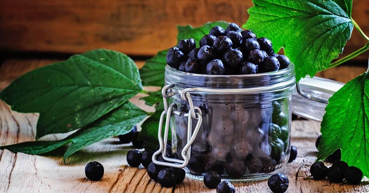 Черноплодная рябина(арония): польза и вред