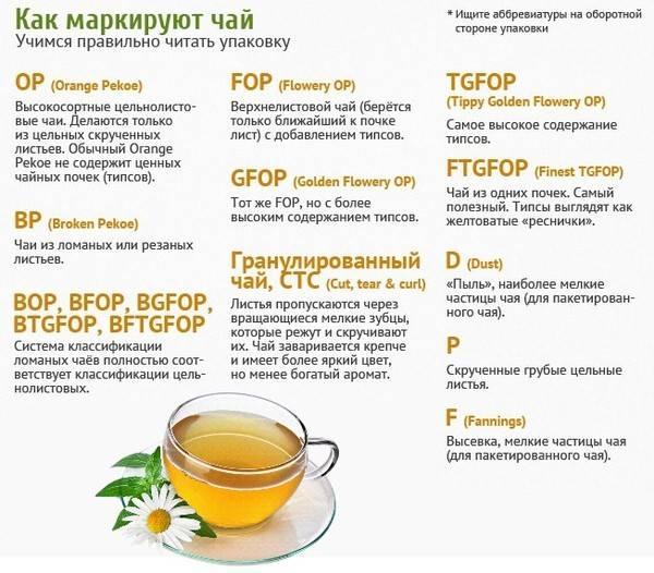 Чем отличается зеленый чай от черного: главное отличие, разница между ними