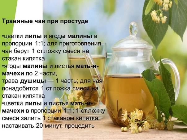 Рецепты и способы приготовления чаев от простуды для взрослых и детей