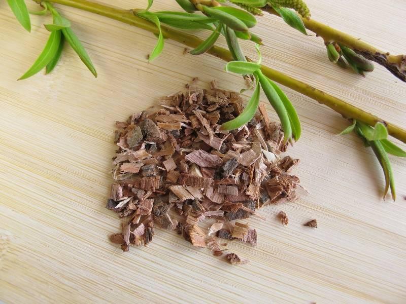 Ива белая: кора, экстракт, листья ветлы, лечебные, полезные свойства дерева, противопоказания, вред, применение