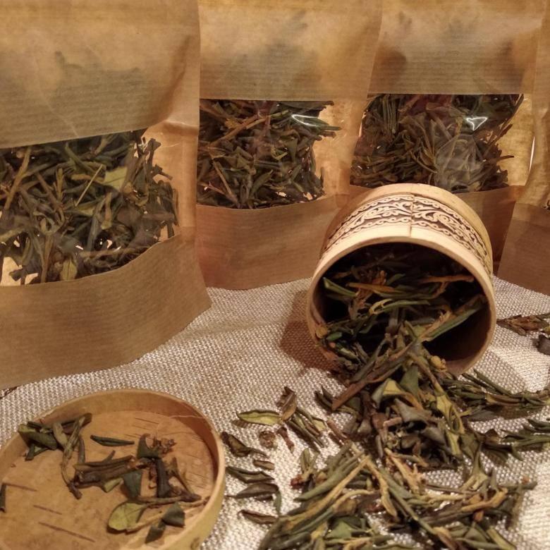 Чай саган дайля. польза и вред природного энергетика