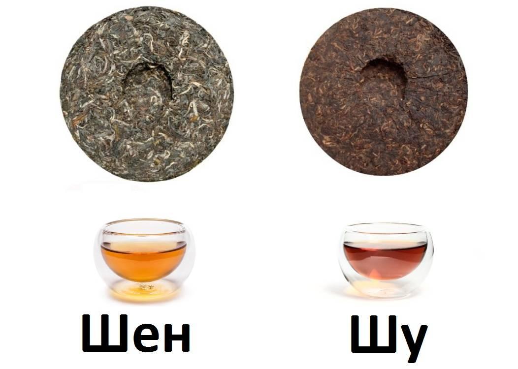 Шу пуэр – что это за чай, как его заваривать, классификация и производство