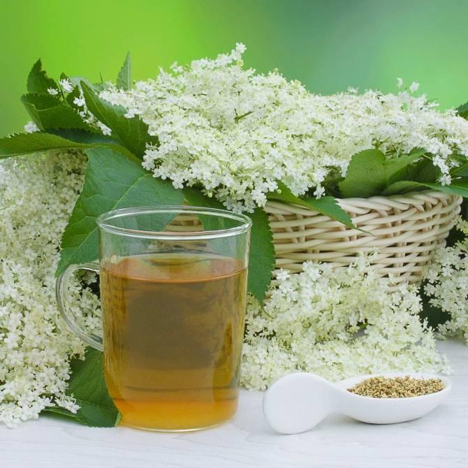 Чай из лабазника лечебные свойства и противопоказания
