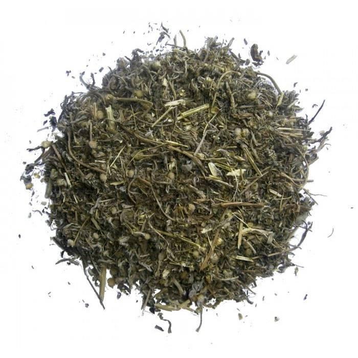 Полынь лечебные свойства — чем полезен чай из полыни