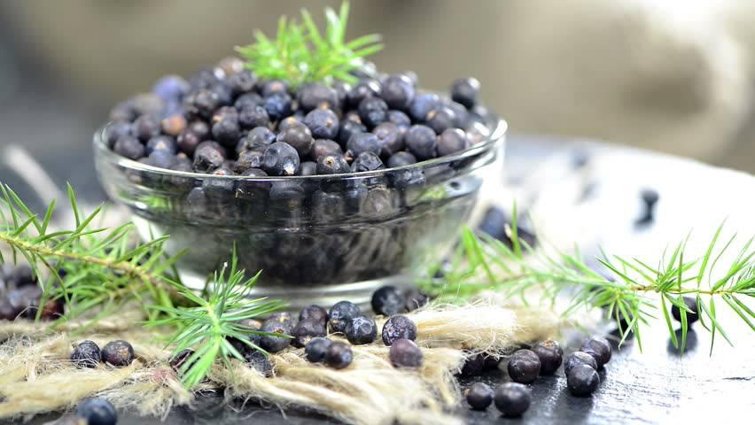 Можжевельник обыкновенный - лечебные свойства и противопоказания