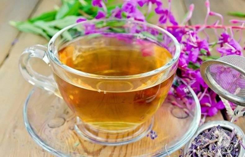 Трава медуница: лечебные свойства и противопоказания, описание