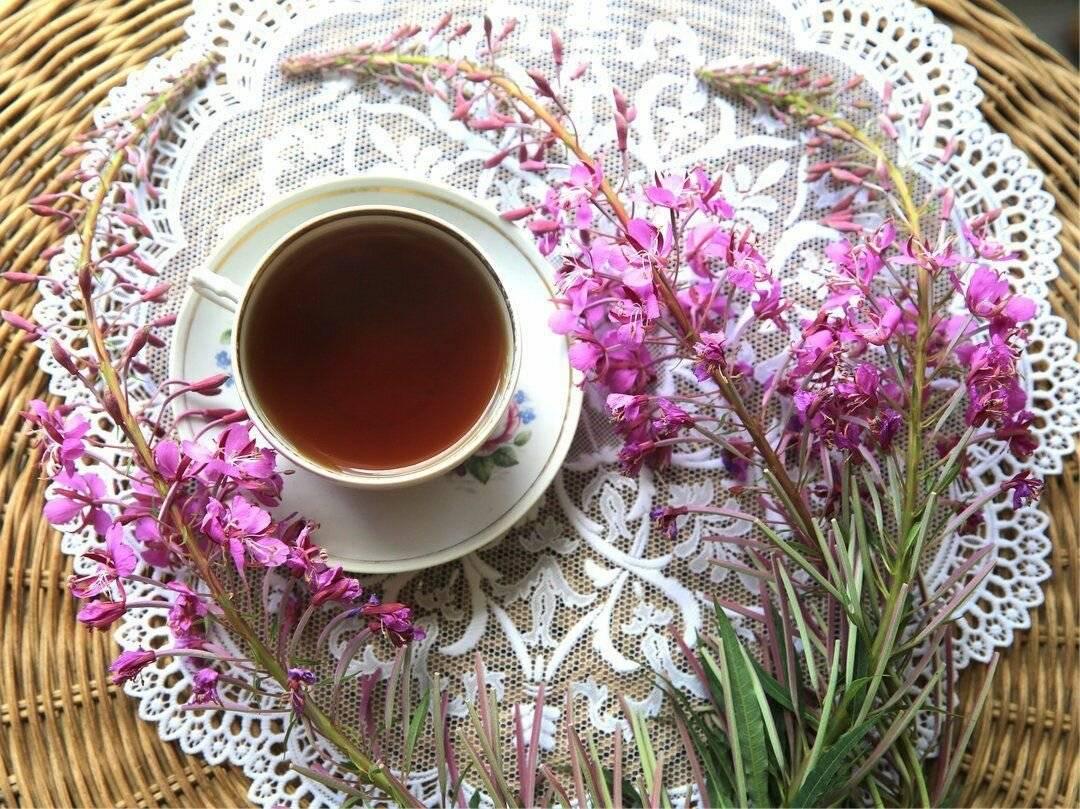 Как заваривать иван-чай: полезные свойства чая