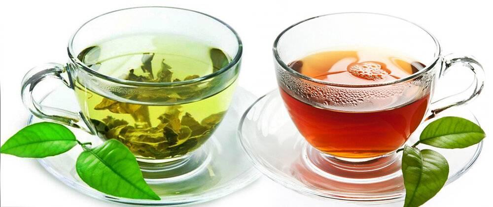 В чем разница между зеленым и черным чаем   в чем разница