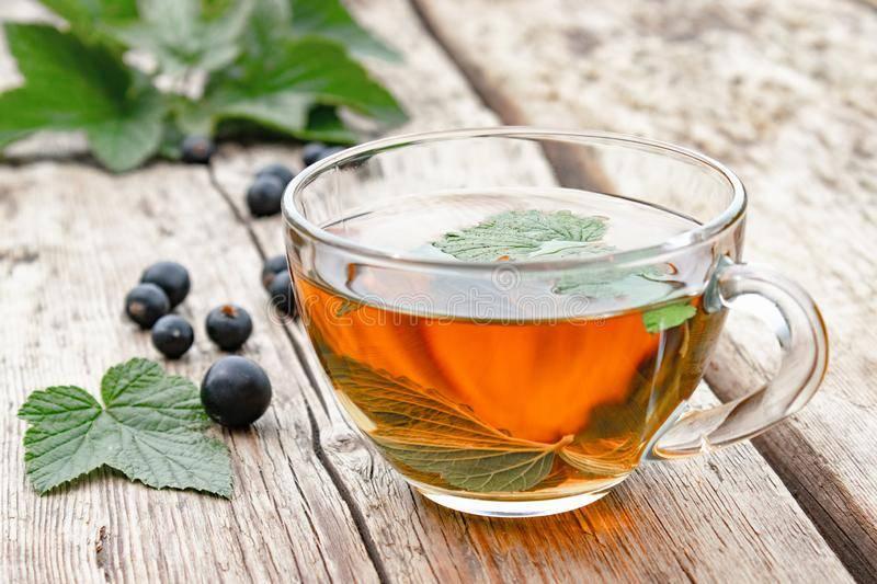 Чай из листьев смородины: польза и вред, как правильно заваривать