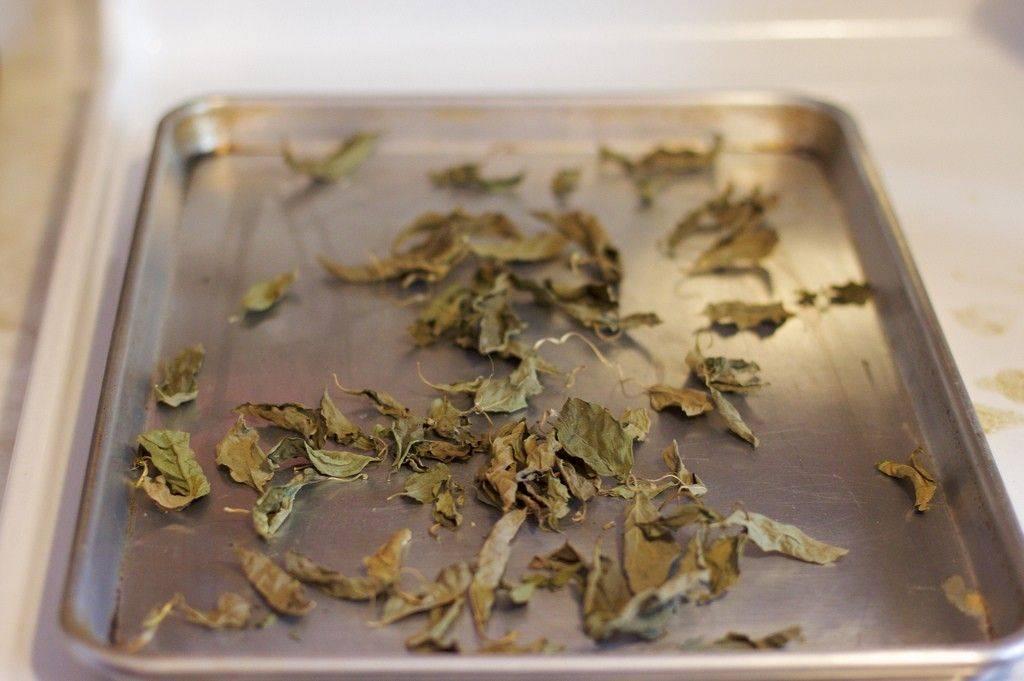 Когда и как собирать базилик? топ правила и секреты сбора семян