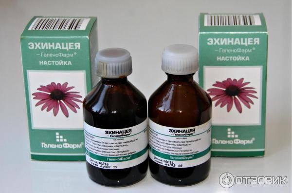 Эхинацея для повышения иммунитета: как использовать себе во благо полезные свойства чудо-цветка?