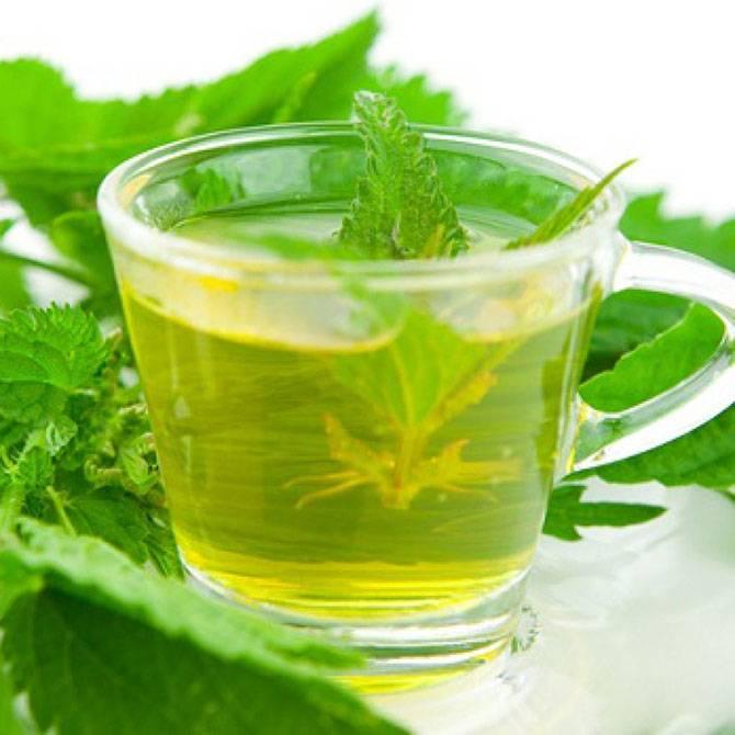 Чай из крапивы - лечебные свойства | методы лечения заболеваний
