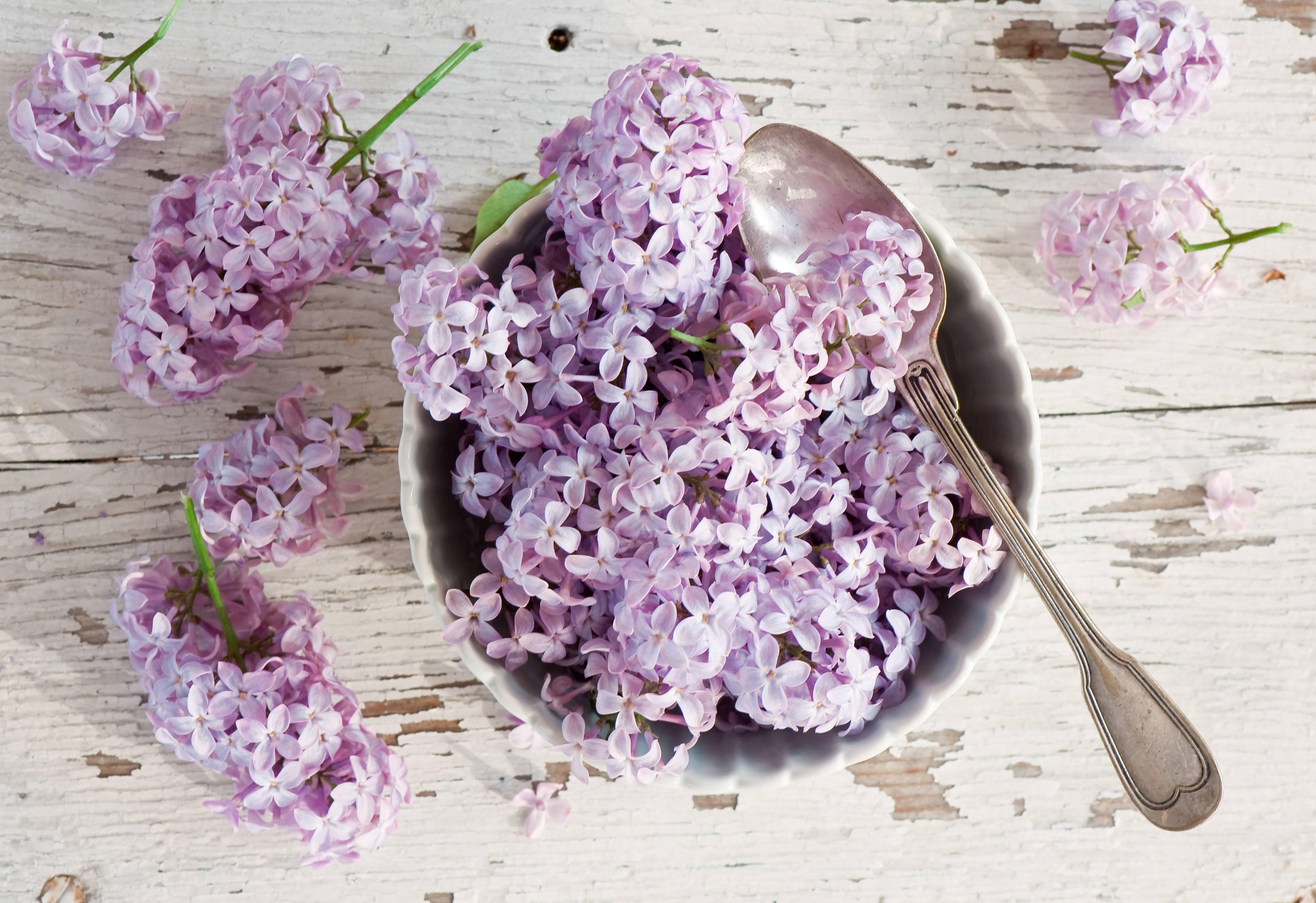 Цветы сирени лечебные свойства и противопоказания
