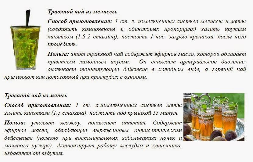 Чай с мятой польза и вреддля здоровья человека